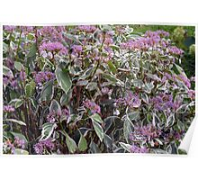 Bush of pink flowers. Poster