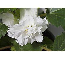 Fringed Begonia Blossom Photographic Print
