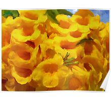 Golden Trumpet Tree Flowers - Ipe amarelo  Poster