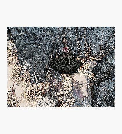 Elegant Seaweed Photographic Print