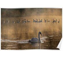 Scouting Swan Poster
