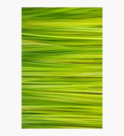 Summer grass Photographic Print