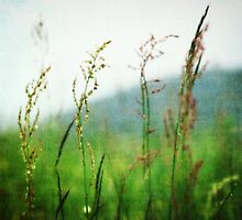 In the Meadow - JUSTART © by JUSTART