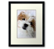 Daisy ~ Sugar and Spice Framed Print