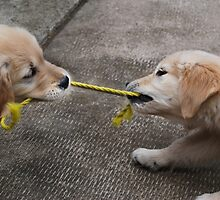 """""""TUG-OF-WAR"""" by Laurie Minor"""