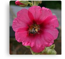 Collection Point Bee Canvas Print