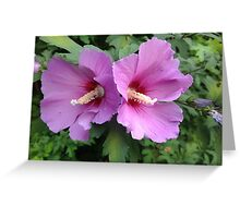 Flower Greeting Card Greeting Card