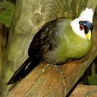 White-Crested Turaco ~ a Green Bird by SummerJade