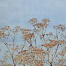 Hogweed - Almost Autumn - JUSTART © by JUSTART
