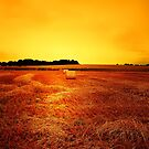 FIELD OF DREAMS by leonie7
