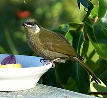 Lewin's Honeyeater by Trish Meyer