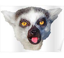 lemur, monkey, monkey Poster