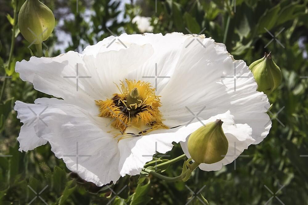 In Full Bloom by heatherfriedman