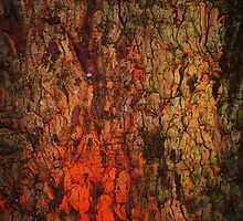 """Campfire""  bark abstract by Laurie Minor"