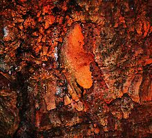 """""""Red Hot Embers"""" abstract on bark by Laurie Minor"""