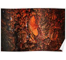 """""""Red Hot Embers"""" abstract on bark Poster"""