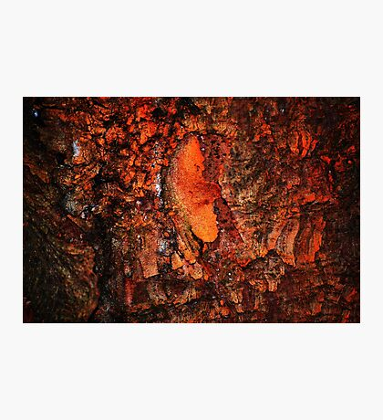 """""""Red Hot Embers"""" abstract on bark Photographic Print"""