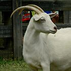 Billy Goat by ctheworld