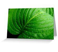 Hosta Leaf Greeting Card