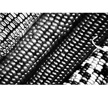 Maize Photographic Print