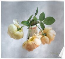 """Lovely Yellow  """"Jude the Obscure"""" English Roses Poster"""