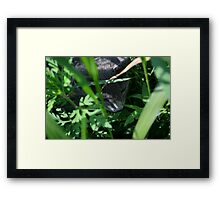 Kitty Playing In The Wild Area Framed Print