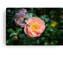 Pink Drift Roses Canvas Print