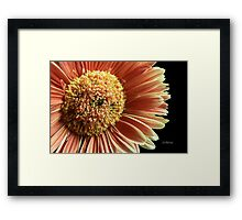 Gentle Whisper Framed Print