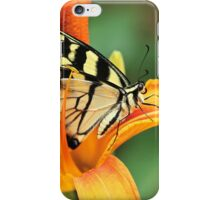 Tiger Swallowtail Butterfly On Daylily iPhone Case/Skin