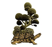 A Turtle Transporting Topiary Photographic Print