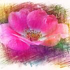 Pink wild rose flower color pencil sketch. Floral photo art. by naturematters