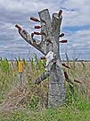 Australian Bottle Tree by Margaret  Hyde