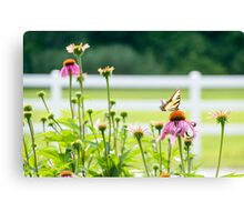 LP - Butterfly Canvas Print