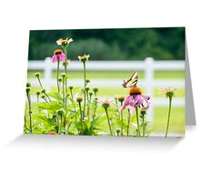 LP - Butterfly Greeting Card