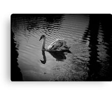 Swan & Ripples Canvas Print