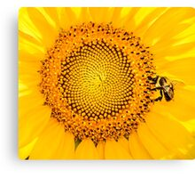 To Bee or not To Bee Canvas Print