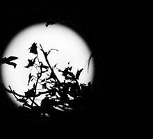 Still Night. by avdpixels