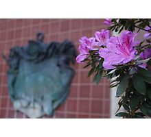 Pirates of the Caribbean Flowers Photographic Print