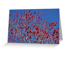 Red against blue Greeting Card