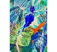 Blue orchid. Photographic Print