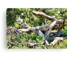 Deadwood on Cherry Creek Trail 1  Canvas Print