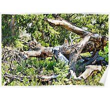 Deadwood on Cherry Creek Trail 1  Poster