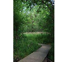 Summer Path Photographic Print