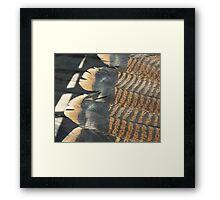 Eastern Turkey Tails Framed Print