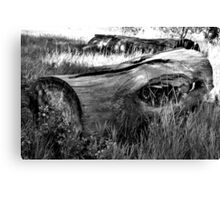 Deadwood on Cherry Creek Trail 2  Canvas Print