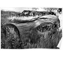 Deadwood on Cherry Creek Trail 2  Poster