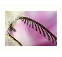 Ermine moth antenna extreme macro Art Print