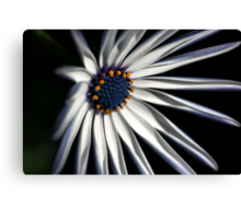 Brighten your Day - Daisy Canvas Print