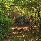 Garden Walk by Steve Randall