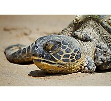 Honu Photographic Print